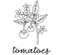 Farmhouse Tomato Vine